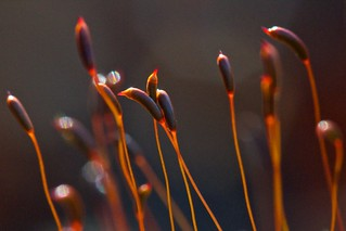 Autumn Moss | by Broot Thanks for 0.85 million views!