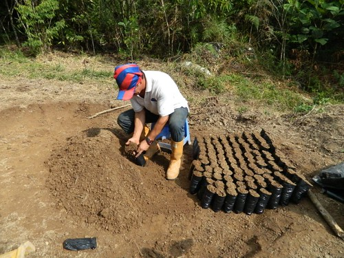 Actividades vivero mata de cacao fase iii abc 12 rna cie for Matas de viveros