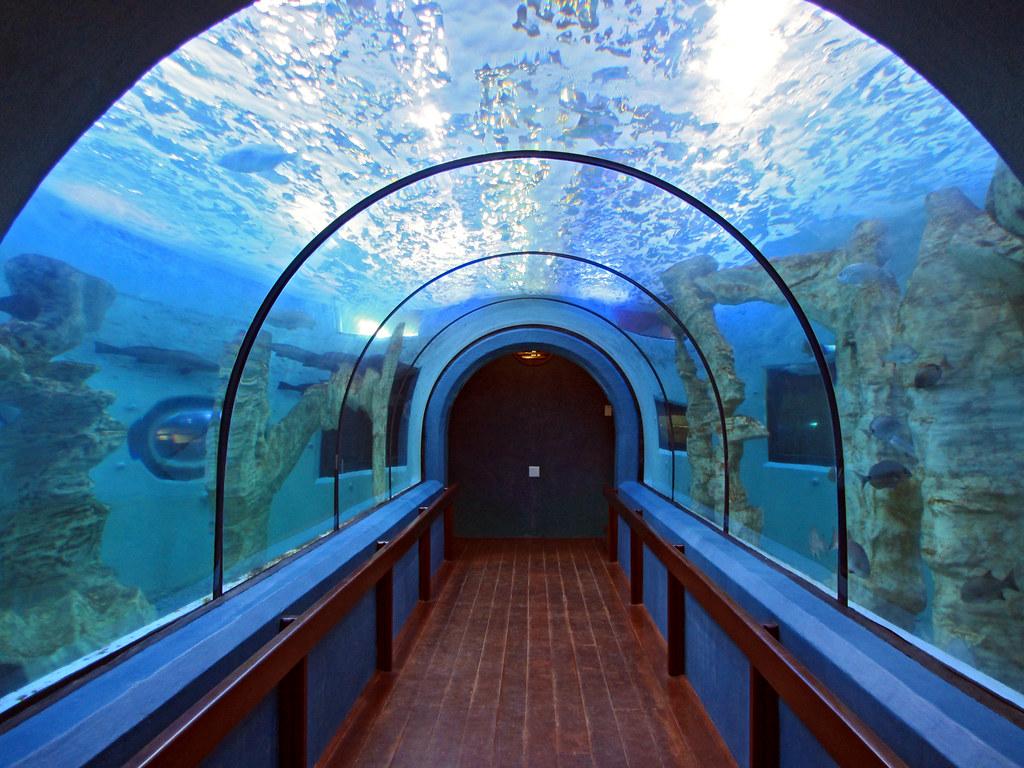 Underwater Tunnel At Swakopmund Aquarium Photo Vicki