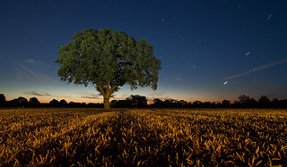 ... the sky is blue and the tree's are green | by JanLeonardo - Light Painting Artist