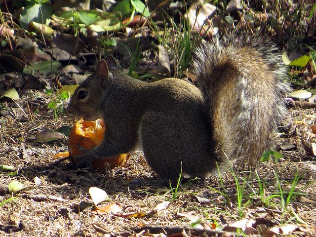 Squirrels Eat Bird Food