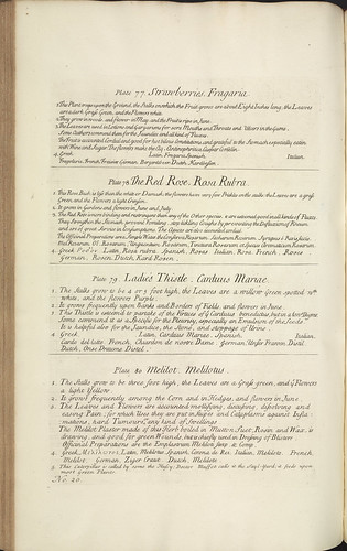 Page from 'A curious herbal' | by National Library of Scotland