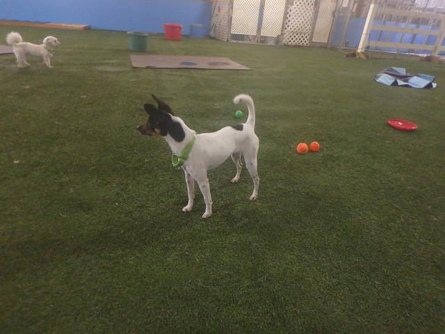 Frisbee Play 7/25/16! :D