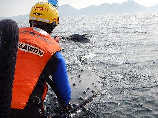 Whale disentanglement off False Bay - 28 August 2016