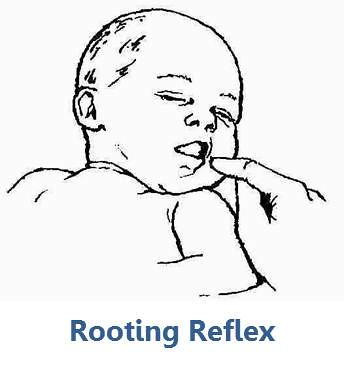rooting reflex ashley arbuckle flickr