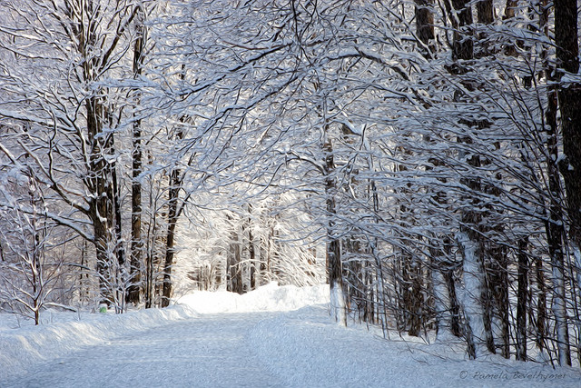 Winter Wonderland In Traverse City Michigan Flickr Photo Sharing