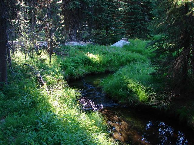 Evening Creek