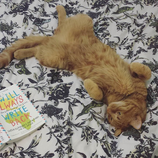 George is definitely starting to feel like himself again 😹😹 his vet check up went great the other day, nothing to worry about just need to get his weight up! 💕 #georgethecat #catsofinstagram #bookstagram