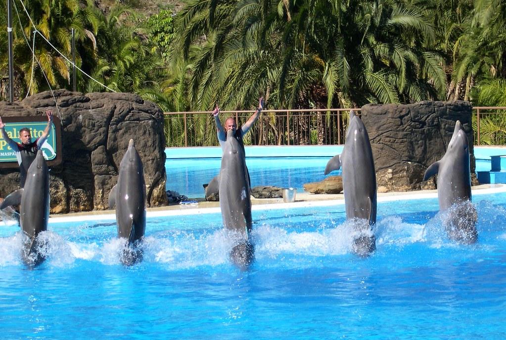 Gran Canaria, Maspalomas , Palmitos-Park, Delfin-Show , 2-…  Flickr