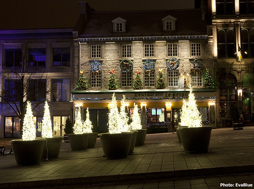 place jacques cartier christmas trees | by Eva Blue