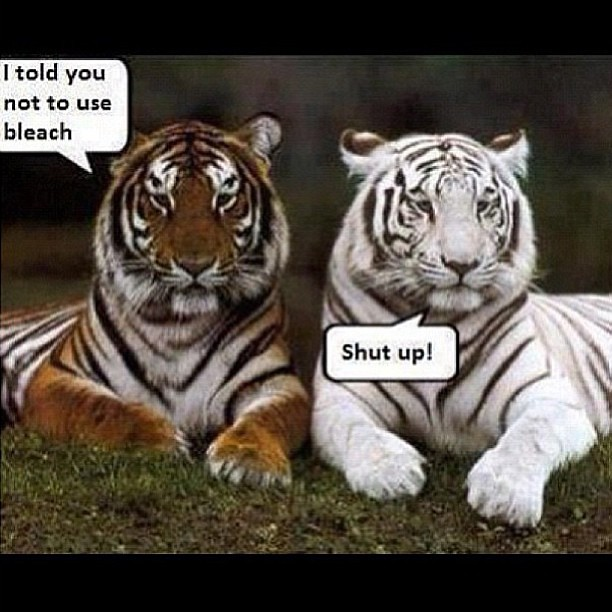 this is funny morning humor like if it made you chuckle flickr