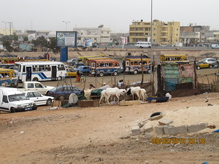 Food producing animals markets