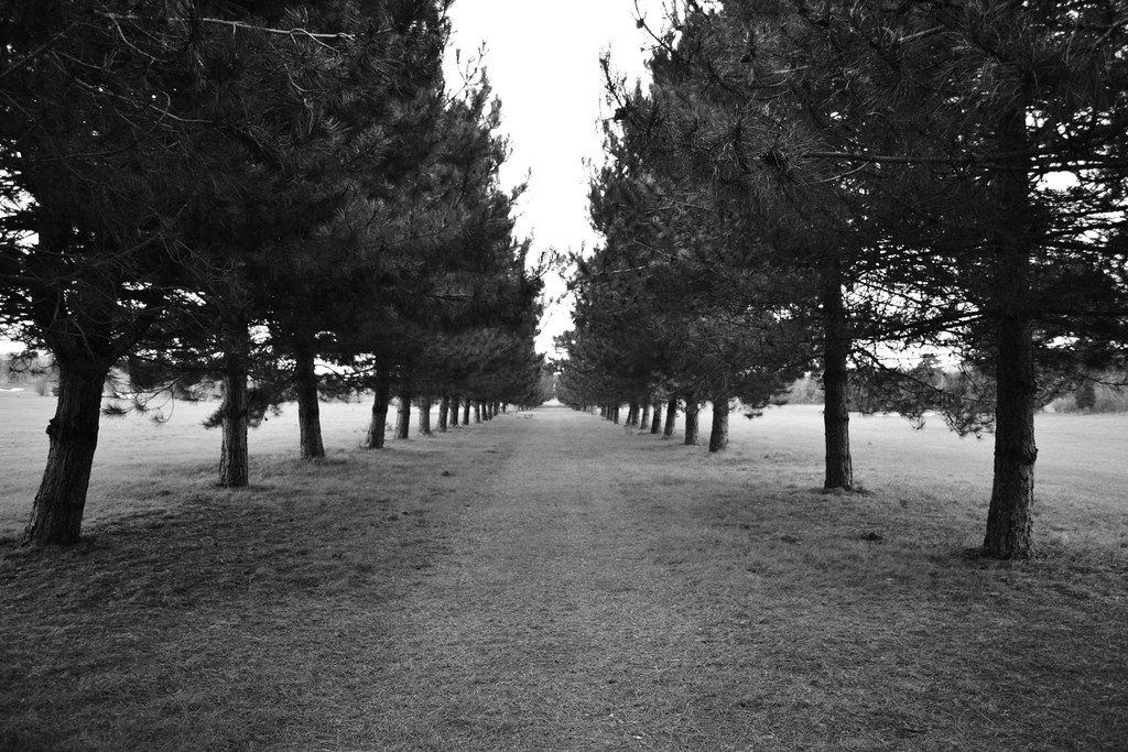 New Golf R >> Pathway Surrounded By Trees (Black and White) | Hill Barn ...