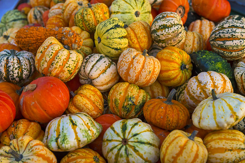 Lots of colorful pumpkins | by Tambako the Jaguar