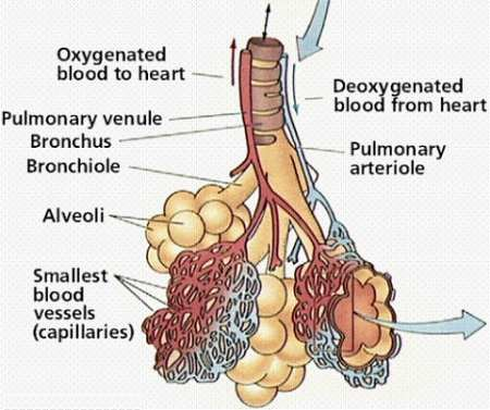 8462343097 furthermore 13607ooa further Label Respiratory System Pictures Of The Respiratory System With Labels Anatomy Chart Body likewise Lower Respiratory System Labeled Lower Respiratory Tract Labeled Upper Respiratory Tract Upper 2 additionally Fig1. on respiratory system