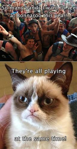 Cat Reacts To Flea Drops Atvantage Ii