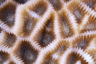 Red Sea Coral 06a | by Alexander Semenov