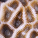 Red Sea Coral 06a
