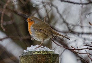 Robin | by Andy Moores Photography