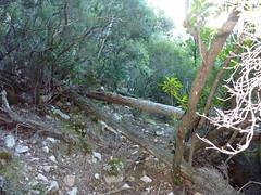 Après le Valdu Grande, les troncs en travers nécessitant la tronçonneuse