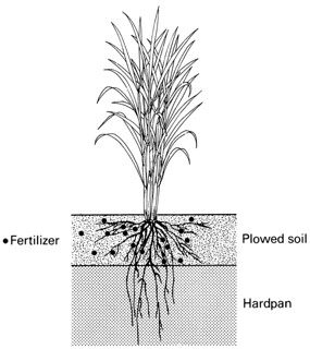 A farmer's primer on growing upland rice_p64