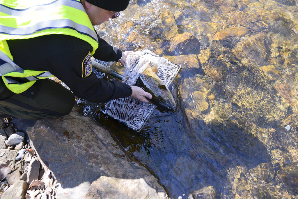 Trout stocking at ftig fort indiantown gap pa for Pa fish stocking