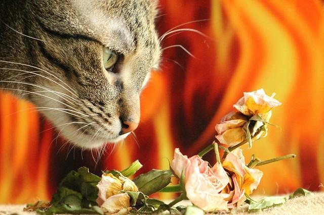 gato-auditando.jpg