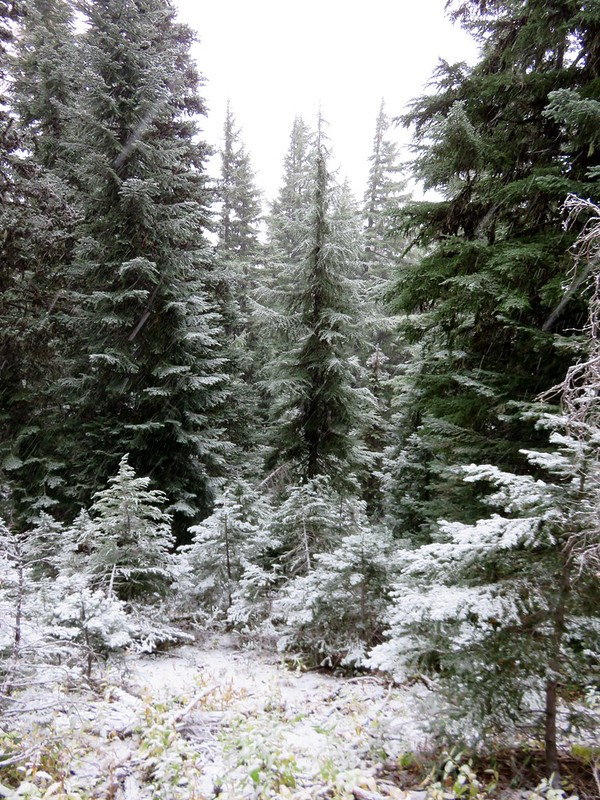 Snow along the Black Crater Trail