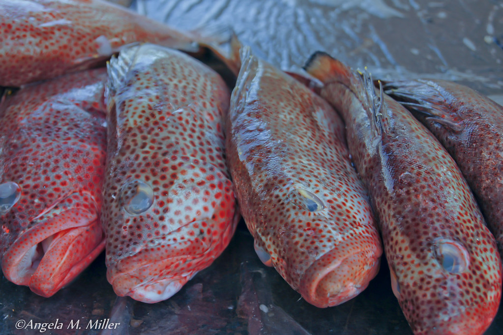 Fish at the curacao floating market venezuelan merchants for What kind of fish am i