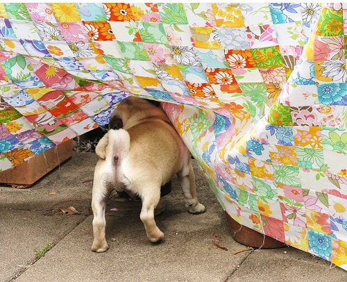 Ollie helping take quilt photos | by Hazelnutgirl