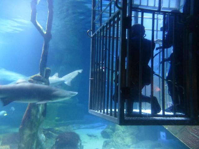 Shark Diving Long Island Aquarium February 17 2013