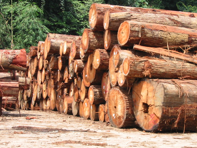 Img_1428 Logs @ end of road