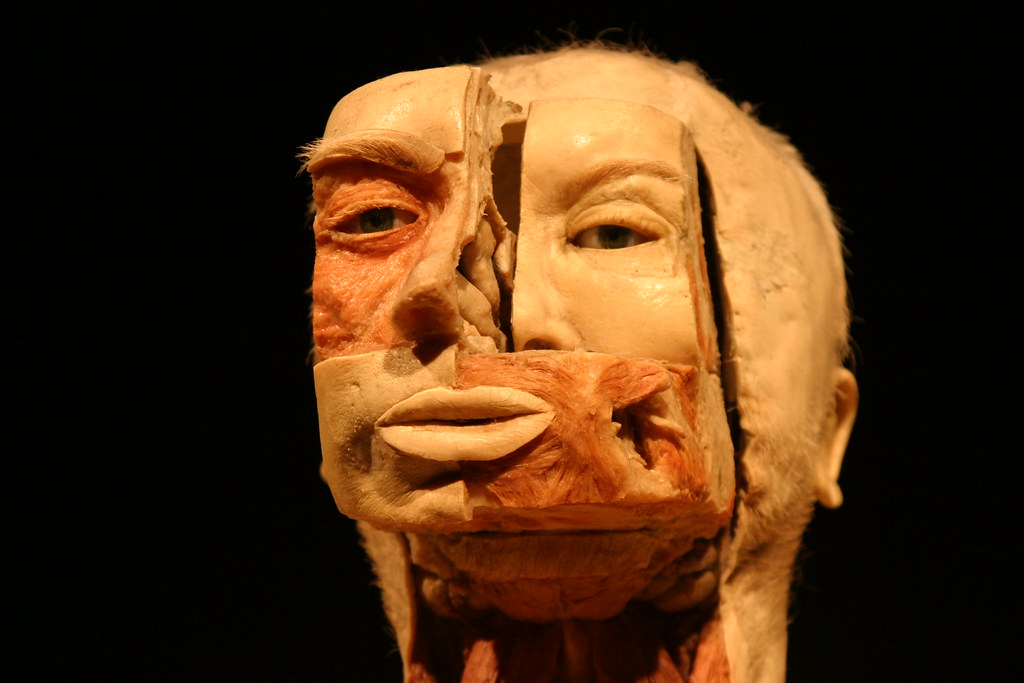 Plastination of the Human Face | Patty Mooney | Flickr