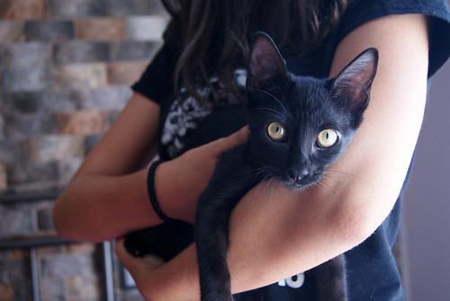 Selva, gatita Pantera guapa, estilizada y divertida esterilizada, nacida en Mayo´16, en adopción. Valencia. ADOPTADA. 29174008276_99ca487810