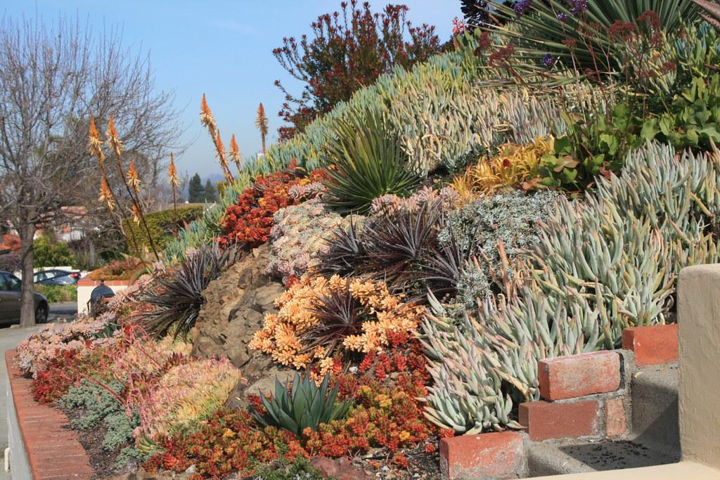 Hillside Landscape Design