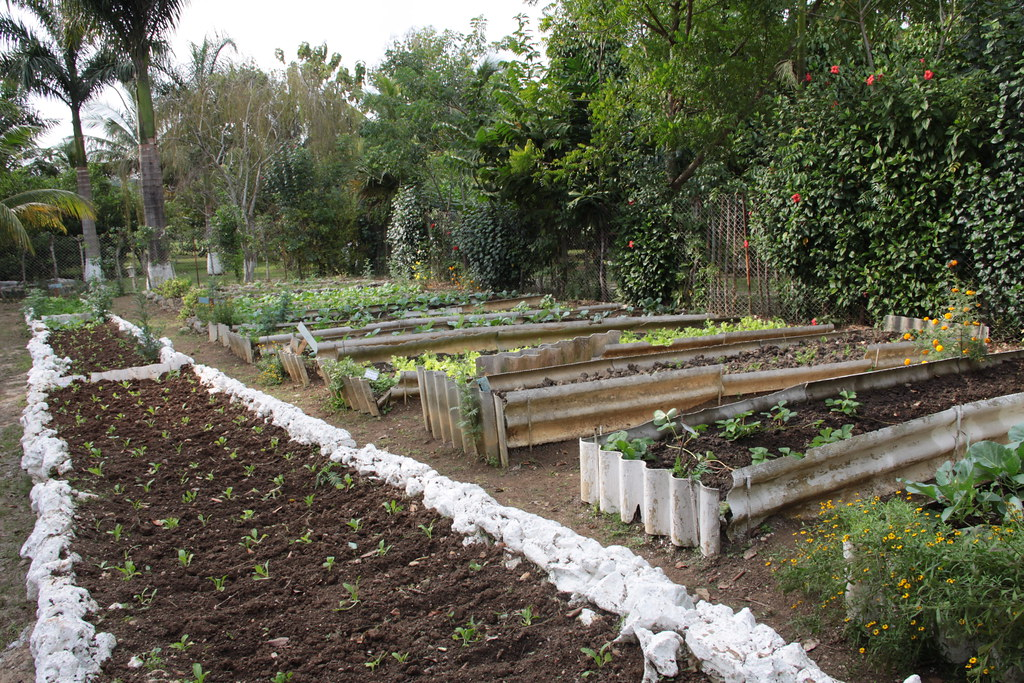 Organic Garden Divino Restaurant Mantilla Havana Cuba