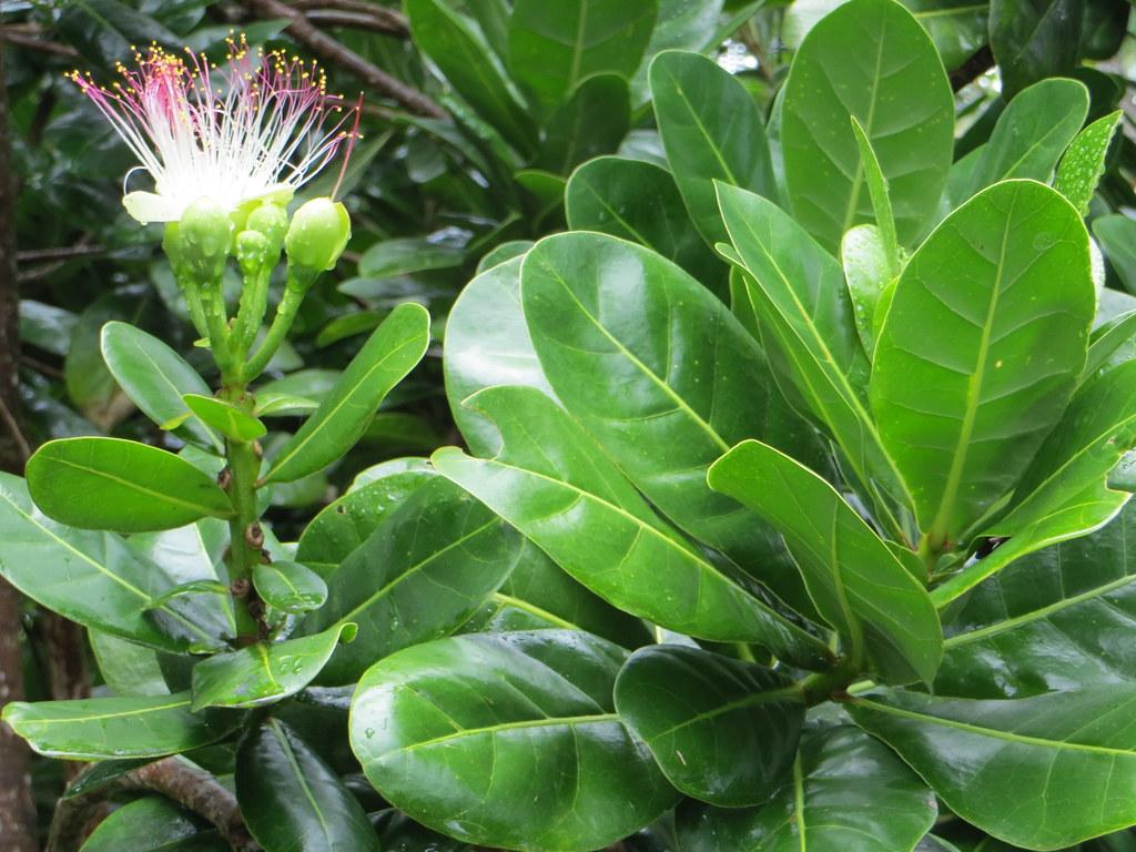 Big Island Flower Delivery Hilobig Island Flower Farms