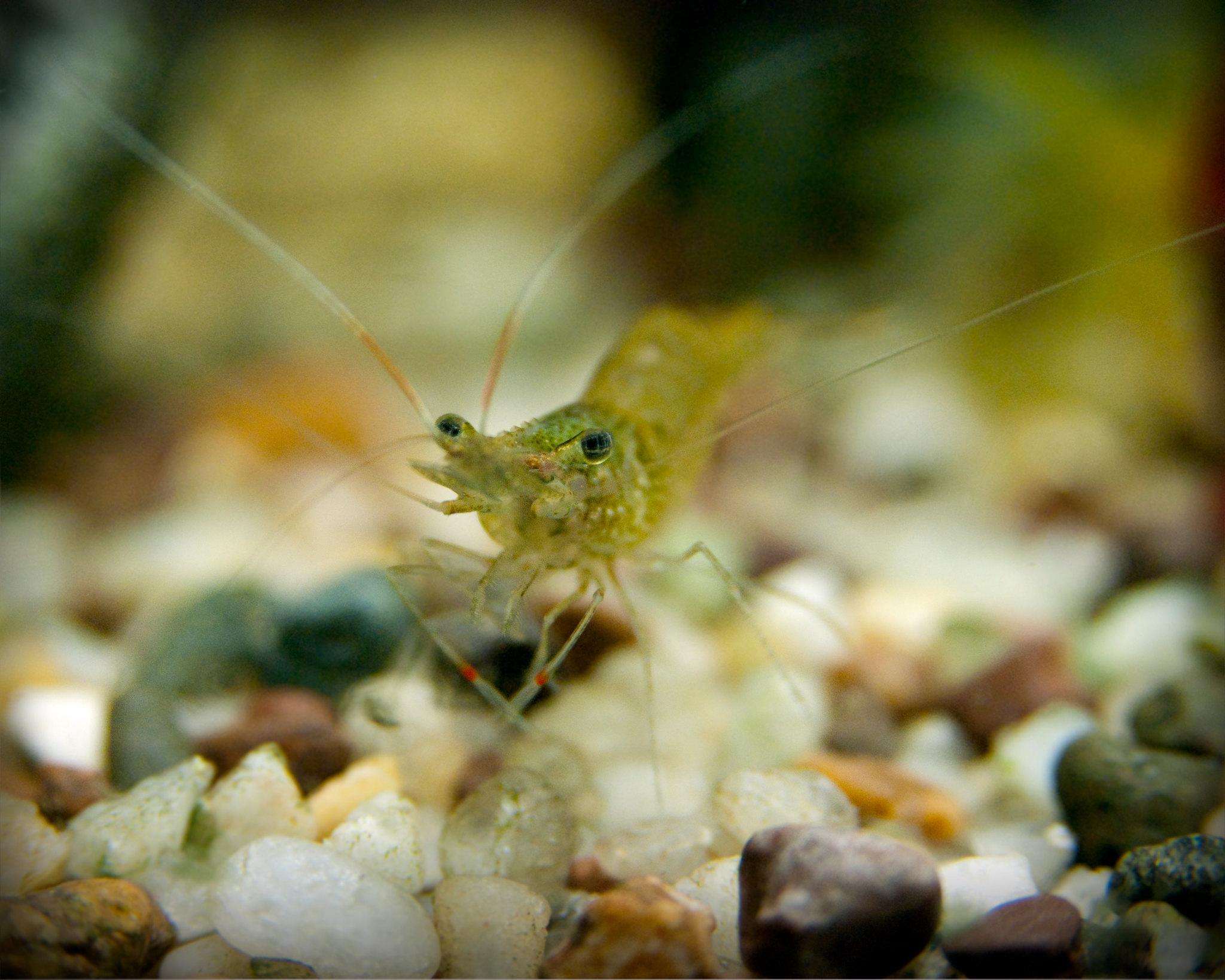 """""""Shrimp Profiling"""""""