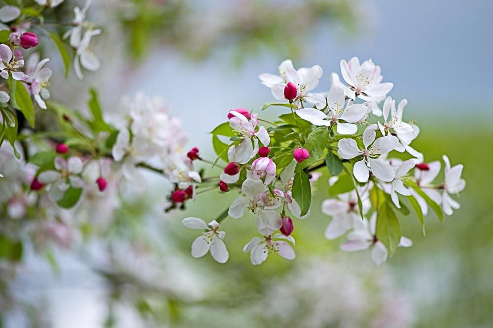 Photograph Spring by Jacky Parker