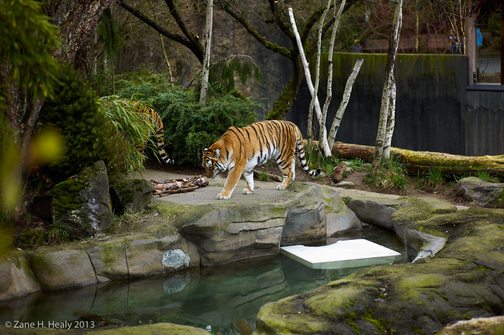 Washington Park Zoo | Portland, Oregon, USA | Zane Healy ...