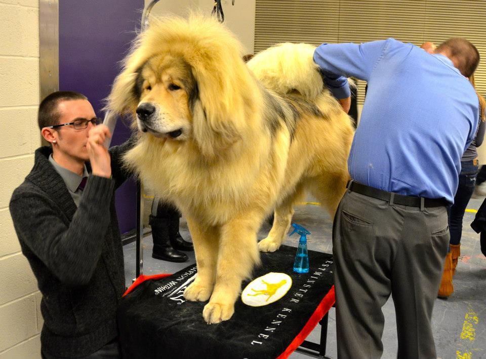 Dog Show Ny