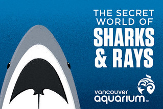 Sharks&Rays_WebGraphic | by GusF
