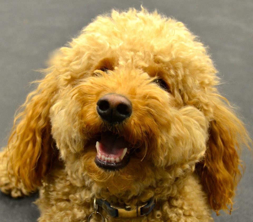 Dog Training In Kissimmee Fl