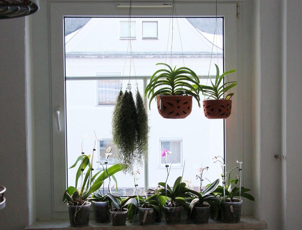 vanda orchideen im tontopf m rz 2013 canon eos 40d ef s. Black Bedroom Furniture Sets. Home Design Ideas