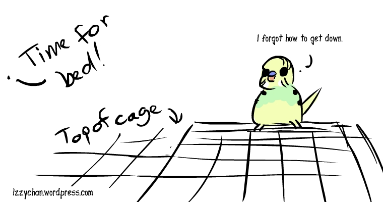 time for bed forgot how to get down from cage top budgie