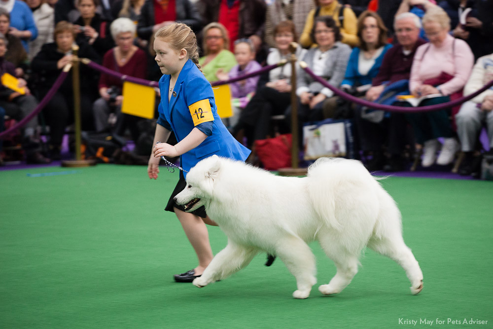 2013 Westminster Kennel Club Dog Show