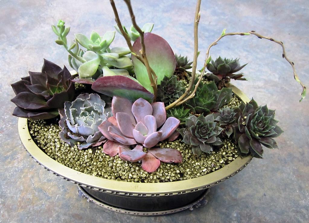 Succulent Dish Garden Lisa Greene AAF AIFD PFCI Flickr
