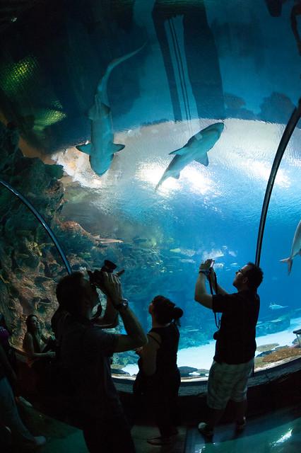 Mandalay Bay Shark Reef Aquarium Flickr Photo Sharing