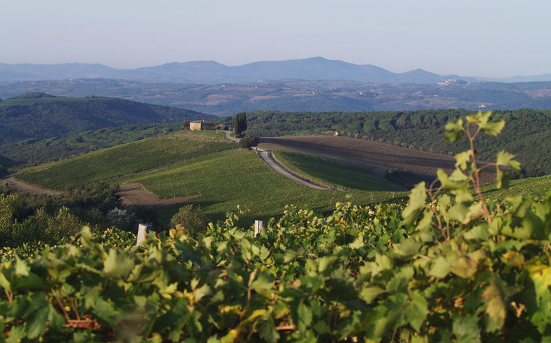 Vineyards at Rosewood Castiglione del Bosco