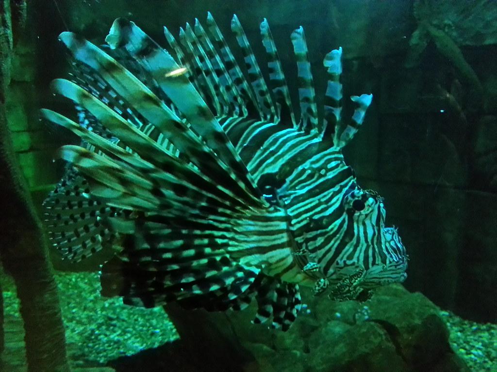 Sea Life Centre Yarmouth Jobs